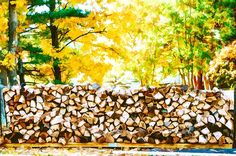 Stack of firewood by Jeelan Clark Fall Trees, Sale Poster, New Print, Firewood, Fine Art Prints, Coupon, Wall Art, Commercial, Painting
