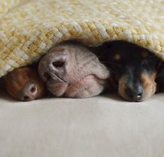 3 noses in a pod