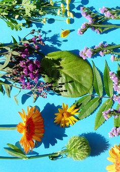 Blumen in den warmen Farben des Spätsommers + 25 Ideen, was wir in dieser schönen Jahreszeit unternehmen können