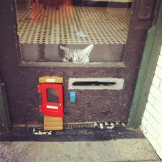 Jimmy the Cat Waits at His Red Cat Door for the Mail Man in NYC