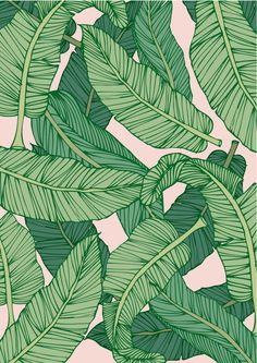 10x makkelijke plant - Flow Magazine NL