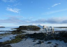 Scotland - horse isle of muck