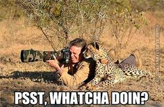 Funny Pictures | people animals | Cheetah surprises photographer