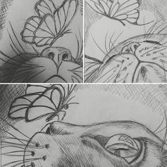 Pencil sketches of cats and butterflies.