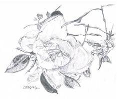 "Saatchi Art Artist Philip Dunn; Drawing, ""Balboa Magnolia"" #art (scheduled via http://www.tailwindapp.com?utm_source=pinterest&utm_medium=twpin&utm_content=post160888617&utm_campaign=scheduler_attribution)"