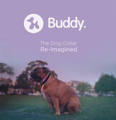 Coleira Buddy