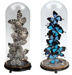 brudante inspiration in style on pinterest taxidermy. Black Bedroom Furniture Sets. Home Design Ideas