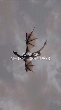 Cuidado de criaturas mágicas