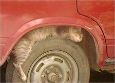 car tyre sleeping cat