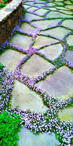 ~ path and ground cover ~