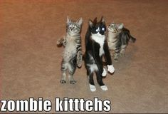 Funny Horse Pictures with Captions | ... s1600/Funny-Pictures-of-Cats-With-Captions-zombie-kittehs-invasion.jpg