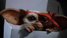 gizmo gremlins | Gizmo en 'Gremlins 2'