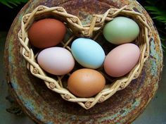 i am newly obsessed with the fact that chickens can lay colorful eggs. i now want chickens that lay blue eggs. Urban Chickens, Chickens And Roosters, Keeping Chickens, Raising Chickens, Healthy Filling Meals, Healthy Foods, Chicken Facts, Gallus Gallus Domesticus, Blue Eggs
