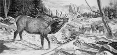 """A Voice In The Wilderness"" wildlife pencil drawing of an elk bugling by Virgil C. Stephens"