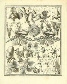 German botanical field guide