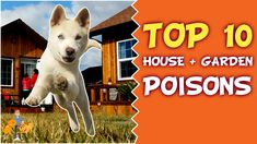 Top 10 Deadly House and Garden Poisons for Your Dog and Cat — Our Pets Health Pet Dogs, Dog Cat, Pets, Poisons, Veterinary Medicine, Flea And Tick, Dog Eating, Over Dose