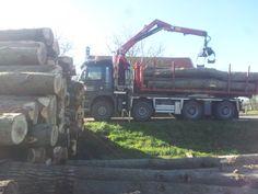aanvoer nieuwe bomen februari 2014