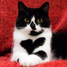 101 Best Cats of Instagram 2016-http://catbreedswithpictures.com/101-best-cats-of-instagram-2016/