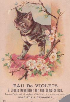 Cat * Eau De Violets * St Louis Mo Victorian Trade Card. Helena Maguire.