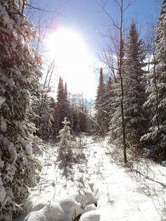 Winter wonderland. Vermont