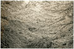 Masao Yamamoto: 1407