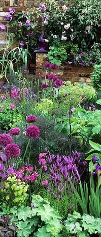 Loving the colours in this garden