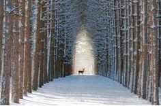 Winter in Quebec,Canada