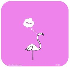 Open up your life. Learn another language. Flamingo Birthday, Flamingo Party, Flamingo Funny, Flamingo Craft, Last Lemon, Pink Bird, Pink Flamingos, Happy Thoughts, Spirit Animal
