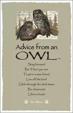 Spirit animal totem advice from an owl. Owl Quotes, Wisdom Quotes, Unicorn Quotes, Bird Quotes, Nature Quotes, Shining Tears, Spotted Owl, Wood Badge, Animal Spirit Guides