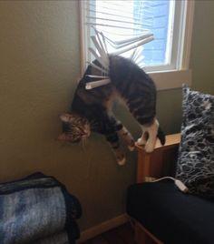 Funnycat - cataccident