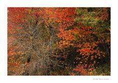 JUAN SANTOS-LUZ NATURAL BLOG: El marco, en rojos