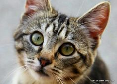 Help me find a home. Please. Find the Lull Street Stray Cats on fb.