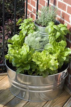 { the vintage wren }: :: tiered lettuce & herb garden