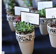 succulent party favors