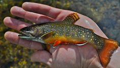 Photo of the Day: Native Beauty | Orvis News