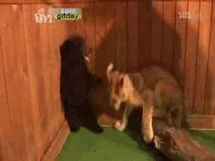 This little cub, terrified on his first day of preschool. | 42 Bear GIFs That Will Give You Life In 2014