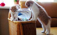 - Un blog sobre gatos - Mi amor a los felinos devino en este blog: a todos y todas que quieran compartir su amor a los mininos aquí - BIENVENIDOS !!!