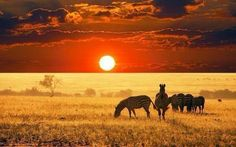 """Fake?Yes - Hoax: Shared as a """"Sunrise in Africa"""", this picture of zebras has been heavily manipulated. Many different versions of the picture exist, like this one."""