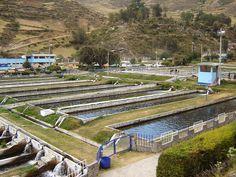 Trout Farm, Ingenio, Junin, Peru