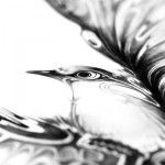 INSPIRED!! Gorgeous Pen and Ink Wildlife by Si Scott