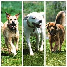 Pretty girls Maggie, Juneau & Josie running at camp! #evasplaypupsPA #dogs #tonguesoutTuesday #dogcamp #smilingdogs #prettygirls #playtime #dogsinnature #runfree #runlikethewind #doggyvacays #doggievacays #dogboarding #itsadogslife #springfever #terriersofinstagram #pitbullsofinstagram #goldenretrieversofinstagram #dogsofinstagram #instapups #brooklyndogs #badassbk #adoptdontshop #rescuedog #endlessmountains #mountpleasant #northeasternPA #PA #pennsylvania