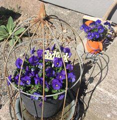 Plants, Plant, Planting, Planets