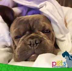 Buenas noches 🌙   #PetsWorldMagazine #RevistaDeMascotas #Panama #Mascotas #MascotasPanama #MascotasPty #PetsMagazine #MascotasAdorables #Perros #PerrosPty #PerrosPanama #Pets #PetsLovers #Dogs #DogLovers #DogOfTheDay #PicOfTheDay #Cute #SuperTiernos