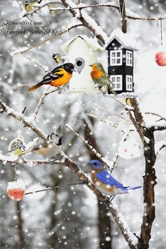 Bird Gif, Amazing Gifs, 1 Gif, Snowy Day, Snow Scenes, Gods Creation, Budgies, Winter Christmas, Color Splash