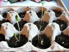 Earth Day Activities for Kids - Plant a Seed - http://TodaysMama.com #earthday