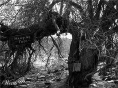 Hanging Tree - Wickenburg, Arizona; abandoned mine
