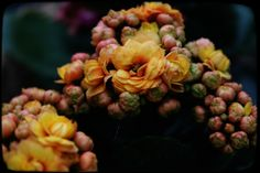 Se potessimo vedere chiaramente il miracolo di un singolo fiore, l'intera nostra vita cambierebbe.  - Buddha -