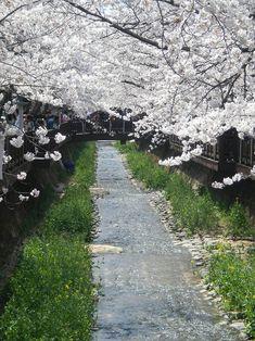 a walk in the park, Korea