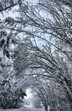 Ahhh..I can just imagine breathing in the crisp, cool air, hearing the snow crunch lightly beneath my feet. Wanting to walk in a winter wonderland...