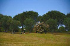 Golf Club Barialto www.barigolfclub.it Address: S.S 100 km 16 Casamassima - Bari Tel/fax +39 080 697 71 05